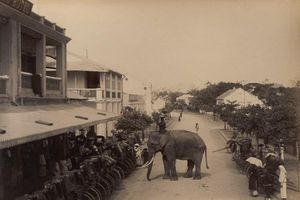 Lạ lùng cảnh voi xuất hiện trên đường phố Hà nội xưa