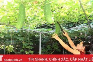 Phụ nữ phố núi Hà Tĩnh 'vượt' nắng hạn chăm vườn rau xanh mướt