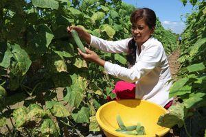 Trà Vinh dành hơn 3.652 tỷ đồng dành cho công tác giảm nghèo