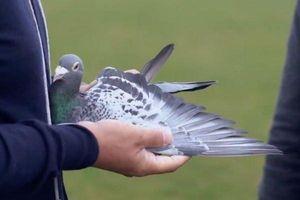 Đại gia gây sốc khi chi 33 tỷ đồng để mua chim