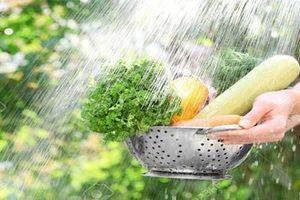 Cách ăn rau nhiều người thích nhưng lại rước vi khuẩn vào cơ thể, 'phá hoại' đường ruột