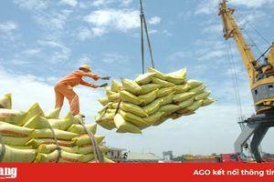 Xuất khẩu gạo 'đón sóng' EVFTA