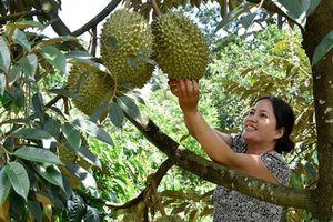 Mê mẩn với vườn cây ở Quảng Tân