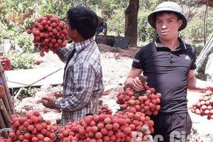 Bắc Giang: Sản lượng tiêu thụ vải thiều ước đạt 164.120 tấn