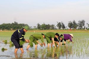Những chiến sĩ công an hăng hái xuống đồng giúp dân cấy lúa
