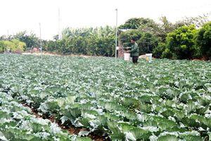 Đảm bảo an toàn thực phẩm trong lĩnh vực nông sản