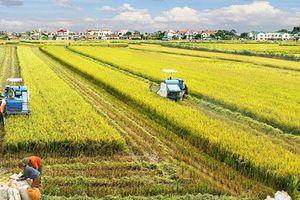 Bộ Nông nghiệp ủng hộ Hà Nội chuyển đổi hơn 40.000ha đất trồng lúa