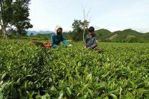 Bao nhiêu kiến nghị sẽ được HĐND tỉnh Hà Tĩnh xem xét?