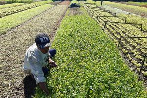 Xây dựng hợp tác xã kiểu mới gắn tái cơ cấu ngành nông nghiệp