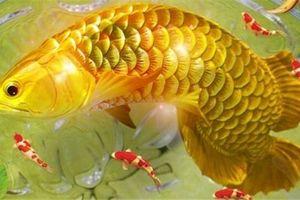Những giấc mơ về cá báo hiệu điềm may