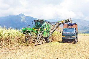 Tập trung tái cơ cấu cây trồng