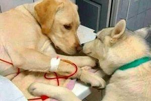 Khoảnh khắc tương trợ ấm áp của động vật khiến trái tim bạn tan chảy