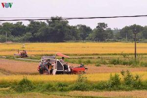 Làm rõ dấu hiệu cạnh tranh không lành mạnh trong việc gặt lúa thuê