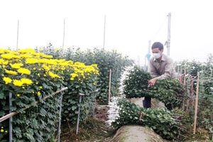 Chuyển đổi cơ cấu cây trồng trên đất lúa: Đúng quy hoạch, sát thực tế