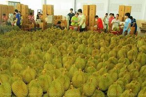 Thái Lan, Trung Quốc kí Nghị định thư buôn bán trái cây