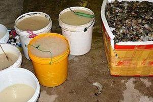 Cà Mau: Vận chuyển tôm tạp chất, thương lái bị xử phạt hơn 60 triệu đồng