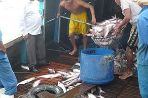 Đề nghị truy tố vợ chồng đại gia thủy sản chiếm đoạt 276 tỉ đồng ở Cần Thơ