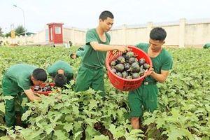 Ba đề án nâng cao chất lượng nuôi dưỡng bộ đội