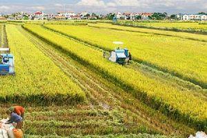 Ba mô hình phổ biến về nông nghiệp tái sinh