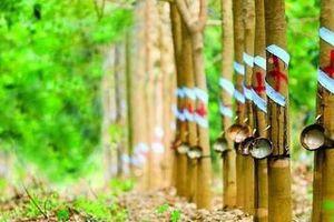 Nhận tiền đền bù đất dự án KCN Nam Tân Uyên, công ty mẹ Cao su Phước Hòa (PHR) báo lãi tăng đột biến