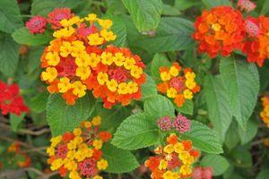 7 loại hoa quen thuộc ở Việt Nam, đẹp mê mẩn nhưng chạm vào dễ 'gặp ngay thần chết'