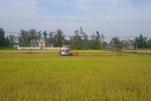 Cạnh tranh gặt lúa: Chồng bị đánh khi đang gặt thuê, vợ quỳ lạy xin tha