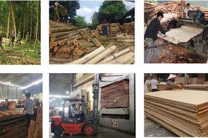 Ngành gỗ dán Việt Nam đối mặt với nhiều rủi ro sau dịch Covid-19