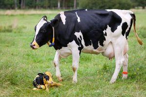 Nông nghiệp thông minh trong thời đại 4.0