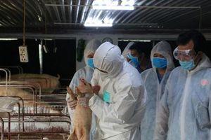 Hưng Yên: Cơ cấu lại ngành chăn nuôi, đa dạng hóa vật nuôi