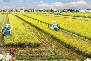 Hà Nội thúc đẩy phát triển dịch vụ logistics trong nông nghiệp
