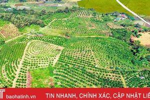 Những đồi cây tiền tỷ từ tình đất, công người ở huyện miền núi Hà Tĩnh