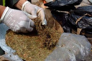 Iran tịch thu 2,5 tấn ma túy