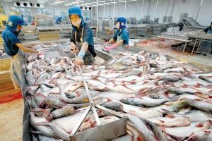Xuất khẩu cá tra có thể sẽ phục hồi vào quý 3/2020