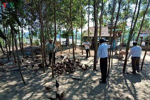 Nông dân Quảng Ngãi làm giàu nhờ chuỗi liên kết sản xuất