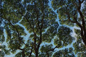 Không chỉ con người, cây xanh cũng 'giãn cách xã hội' và đây là lý do