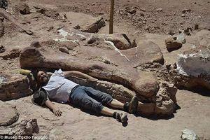 Phát hiện hóa thạch khủng long cao bằng tòa nhà 7 tầng