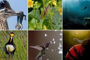 Những bức ảnh chim đẹp nhất Giải thưởng Nhiếp ảnh Audubon