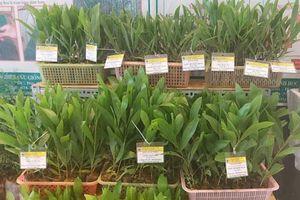 Cần nghiên cứu sâu về gen trong chọn tạo giống mới
