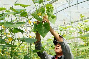 Lâm Đồng: Nhà nông thu nhập 35 triệu đồng/tháng