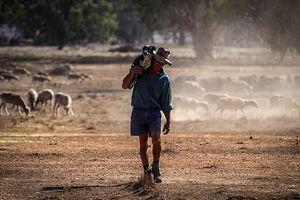 Nông dân Australia chật vật cạnh tranh nguồn nước với chủ đầu tư TQ