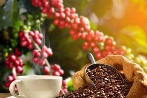 Giá nông sản hôm nay 13/7: Tiêu tăng ở Gia Lai, cà phê giảm nhẹ