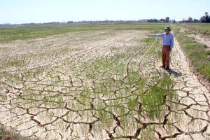 Chuyển vụ gieo trồng để 'né' hạn