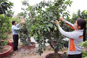 Hải Phòng hỗ trợ nông dân phát triển sản xuất, kinh doanh
