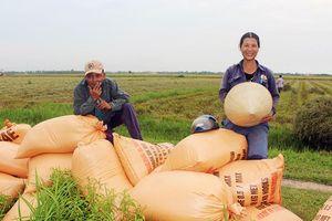 Nhân rộng các mô hình canh tác lúa tự nhiên, hữu cơ