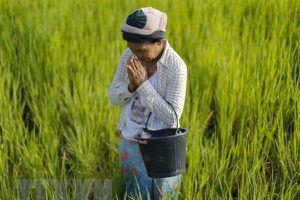 Thái Lan đưa 13 loại thảo dược và giống cây sử dụng làm 'thuốc trừ sâu xanh'