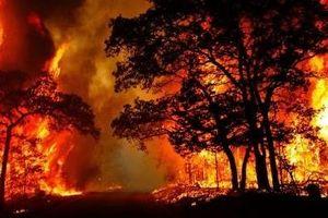 Nâng cao hiệu quả phòng, chống cháy rừng trong mùa nắng nóng