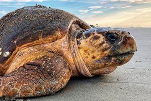 'Chẳng có lợi lộc gì khi ăn thịt rùa biển cả'