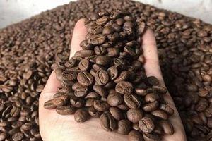 Giá nông sản hôm nay 15/7: Giá cà phê và tiêu giảm