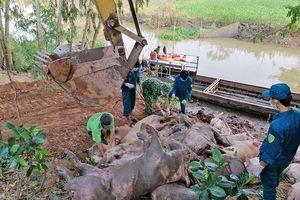 An Giang ngăn chặn tình trạng nhập lậu lợn