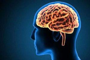 Kỳ lạ về bộ não con người